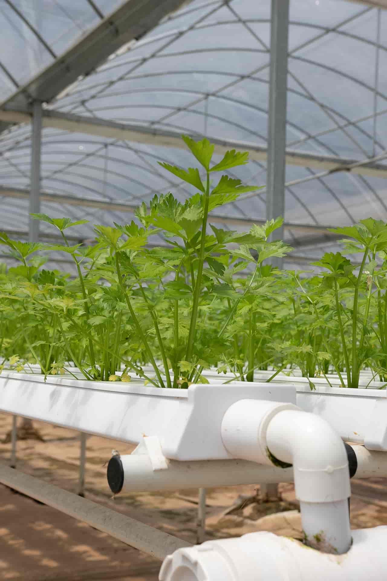 Nutrient Film Technique Hydroponic Farming